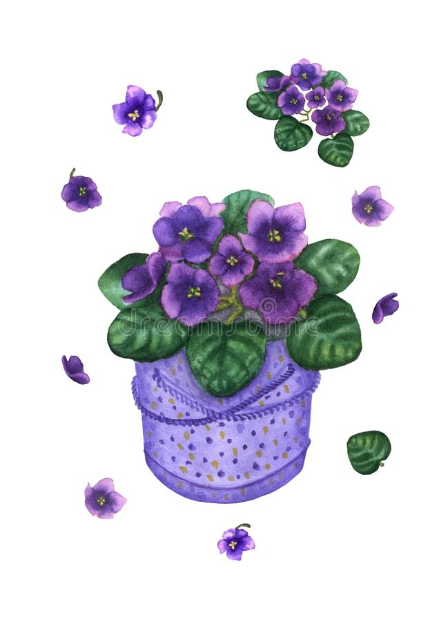 Hand drawn watercolor purple viola flowers set isolated on the white background royalty free illustration