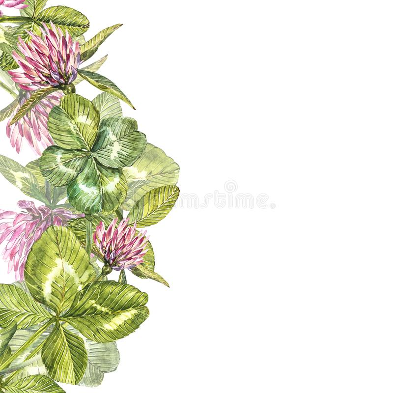 Hand-drawn watercolor red clover flower illustration. Painted botanical three-leaved meadow grass, isolated on white vector illustration