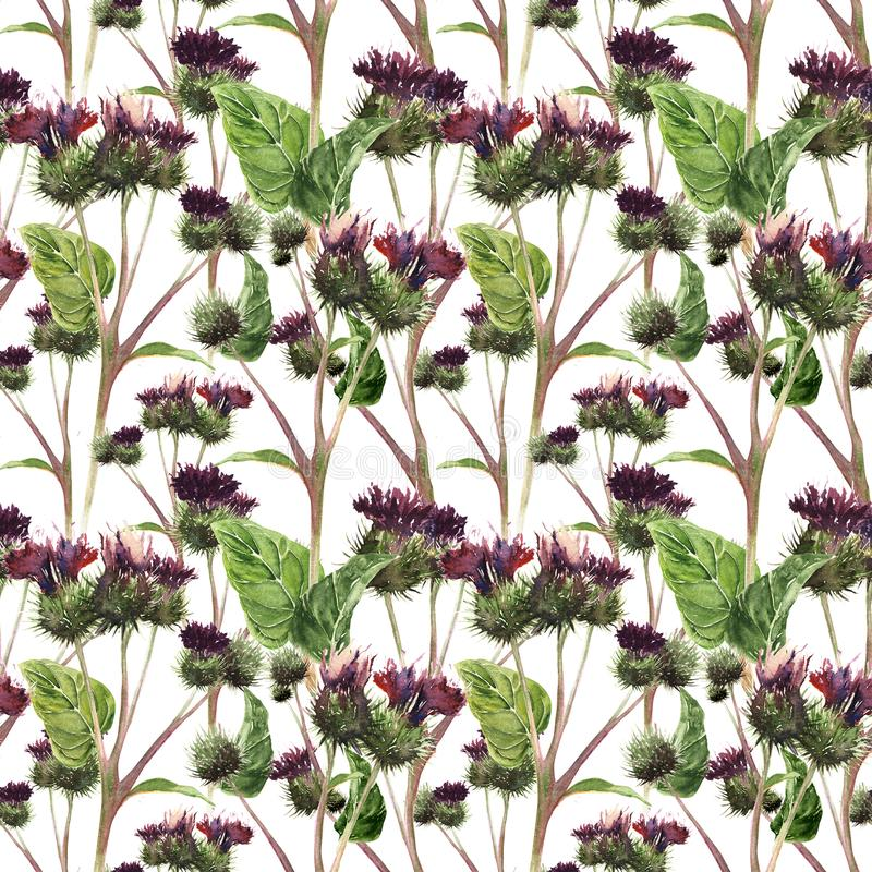 Hand drawn watercolor seamless pattern of a colorful gentle meadow thistle. Botanical vintage watercolor pattern stock illustration