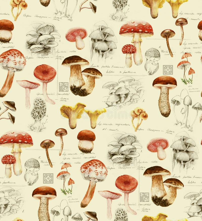 Hand-drawn watercolor seamless pattern of the different mushrooms royalty free illustration