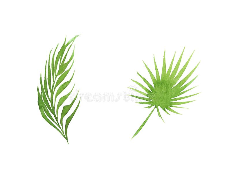 Watercolor set of coconut palm tree leaves isolated stock illustration