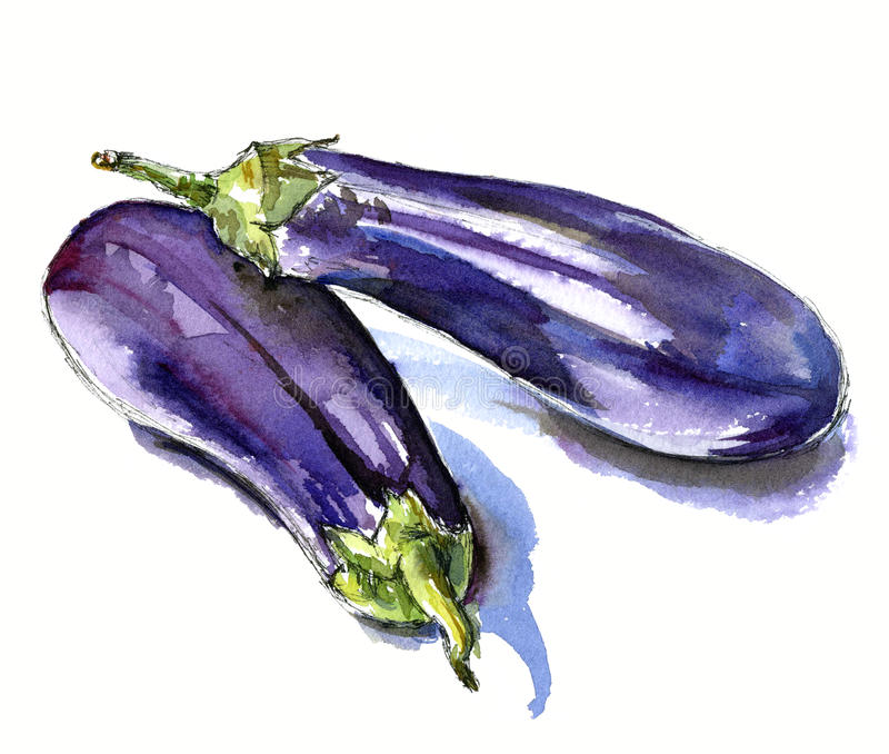 Hand drawn watercolor sketch vegetables eggplant stock photos
