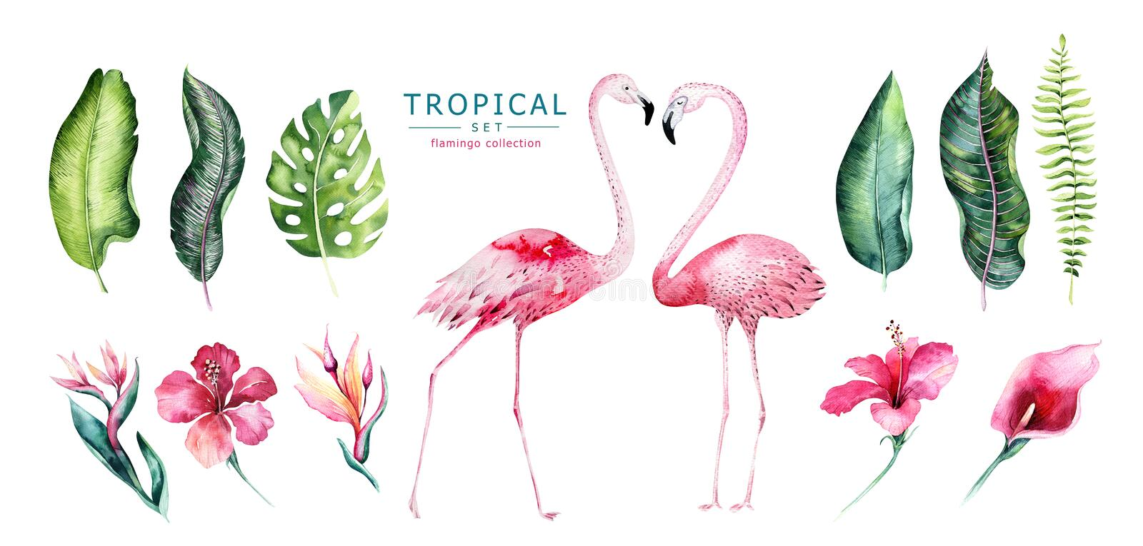 Hand drawn watercolor tropical birds set of flamingo. Exotic rose bird illustrations, jungle tree, brazil trendy art royalty free illustration