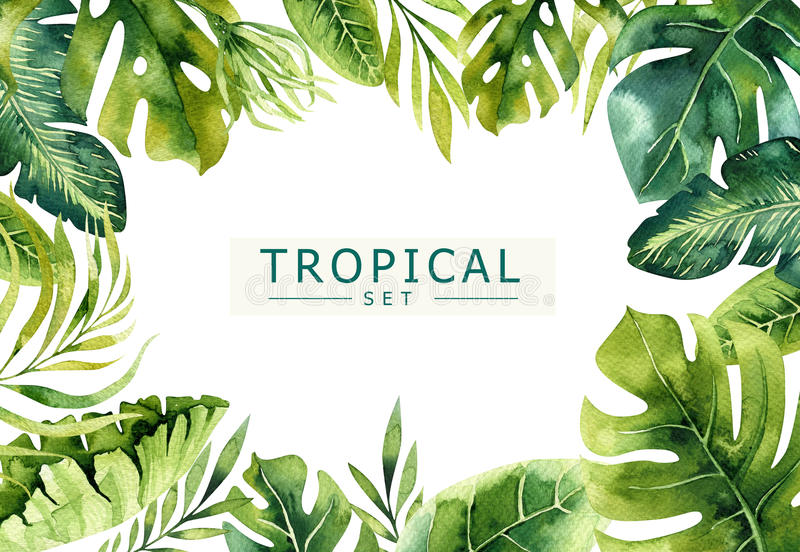 Hand drawn watercolor tropical plants background. Exotic palm leaves, jungle tree, brazil tropic borany elements royalty free illustration