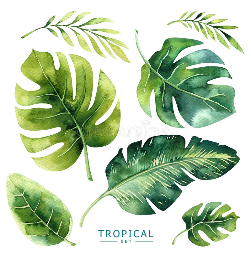 Hand drawn watercolor tropical plants set. Exotic palm leaves, j royalty free illustration