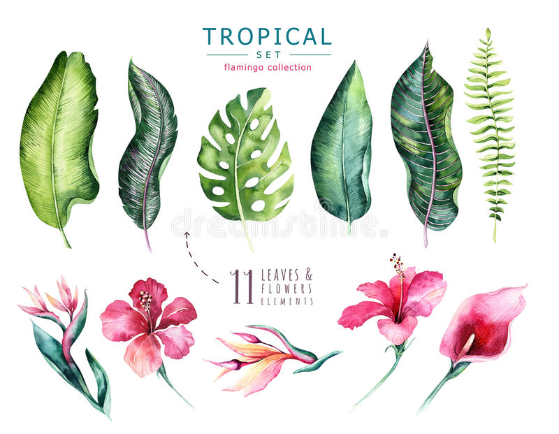 Hand drawn watercolor tropical plants set . Exotic palm leaves, jungle tree, brazil tropic botany elements and flowers royalty free illustration