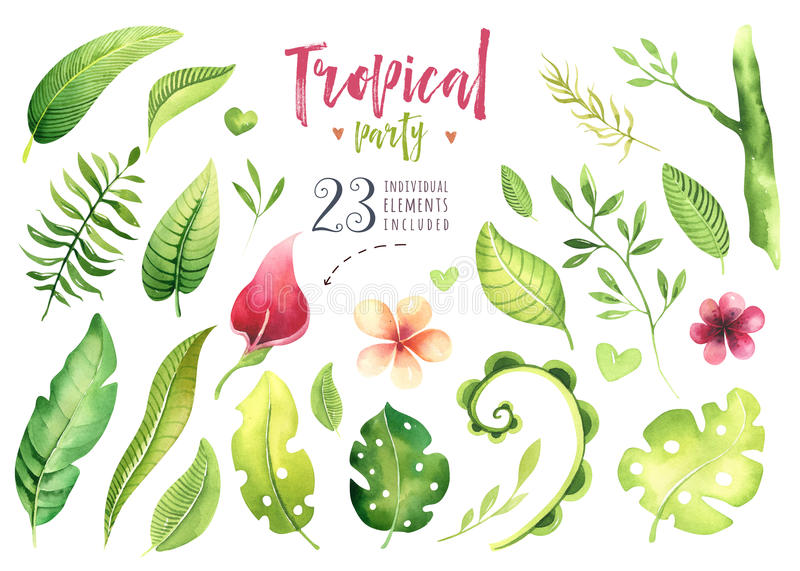 Hand drawn watercolor tropical plants set . Exotic palm leaves, jungle tree, brazil tropic botany elements and flowers vector illustration