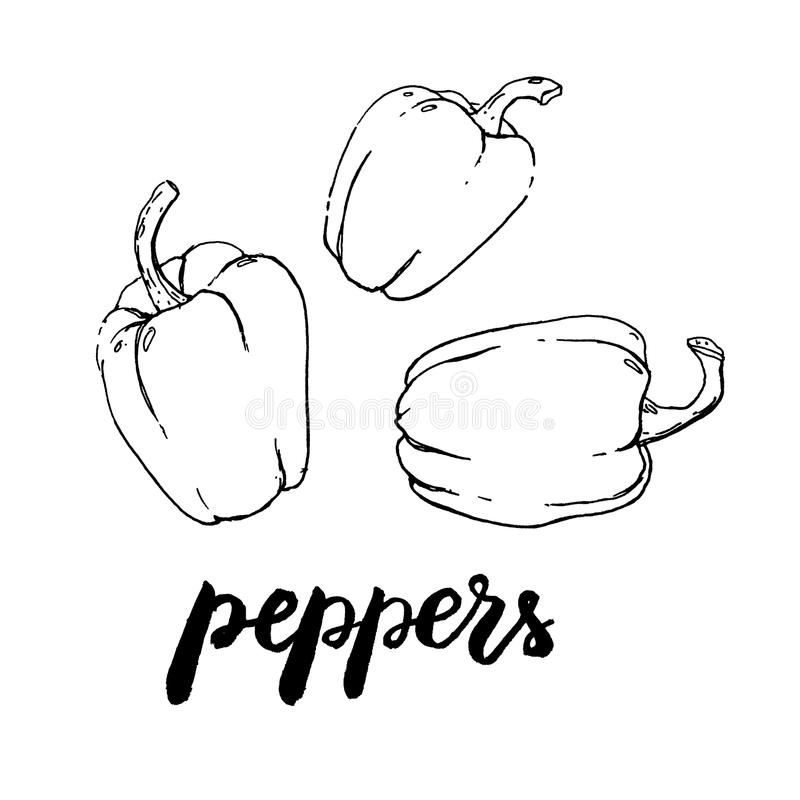 Hand drawn watercolor vegetables peppers with handwritten words royalty free illustration