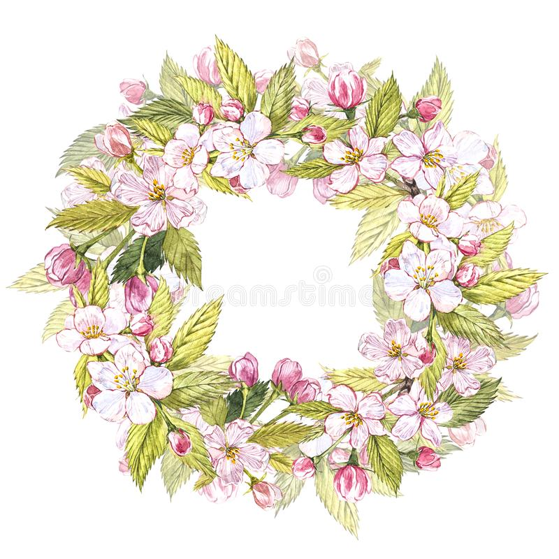 Hand-drawn watercolor wreath of flowers of apples and leaves illustration. Watercolor botanical illustration isolated on stock images