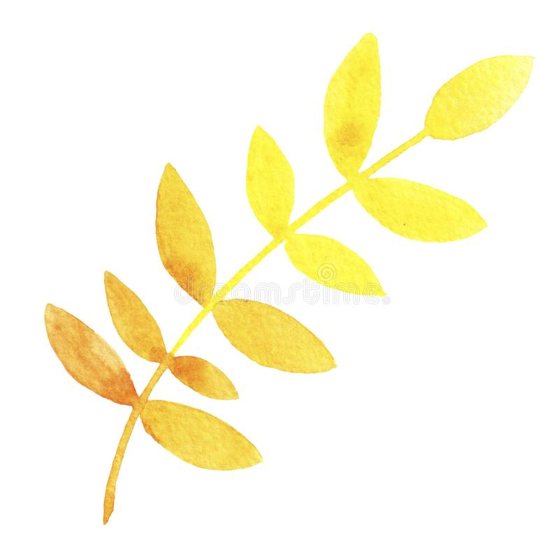 Hand drawn watercolor  yellow rowan leaf isolated on white background. royalty free illustration