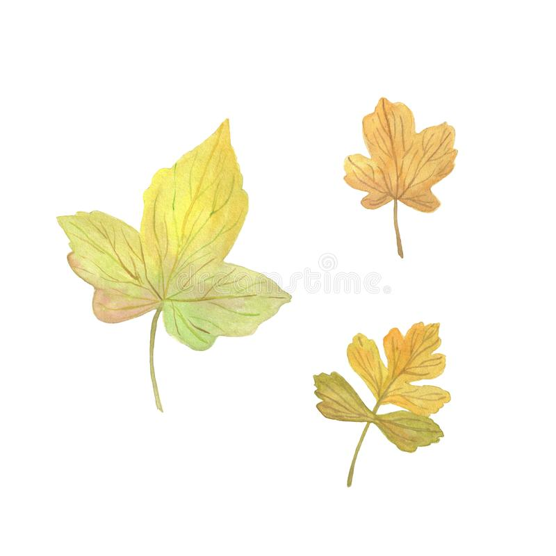 Watercolor yellowish autumn tree leaves set, elements on the white background, seasonal watercolor stock illustration