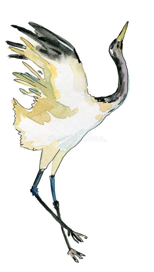 Hand-drawn waterverftekening van de Japanse dansende kraan Illustratie van de vogel op de witte achtergrond royalty-vrije illustratie