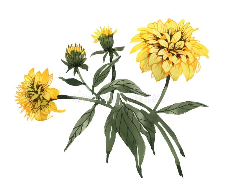 Hand drawn yellow flowers with green leaves isolated on white background. royalty free illustration