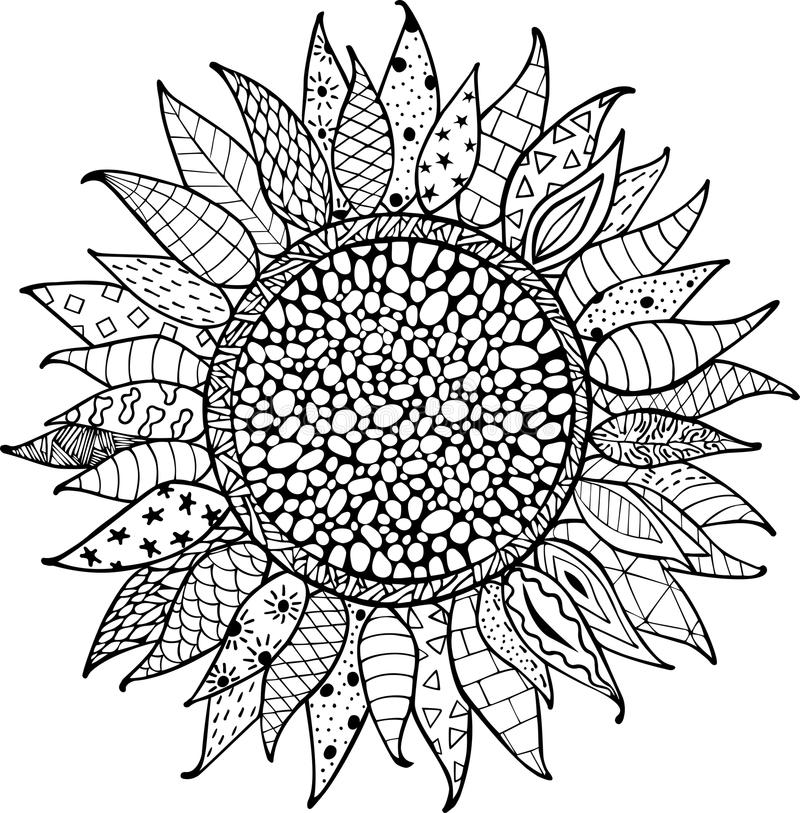 Download Hand Drawn Zentangle Sunflowers Ornament For Coloring Book Stock Vector