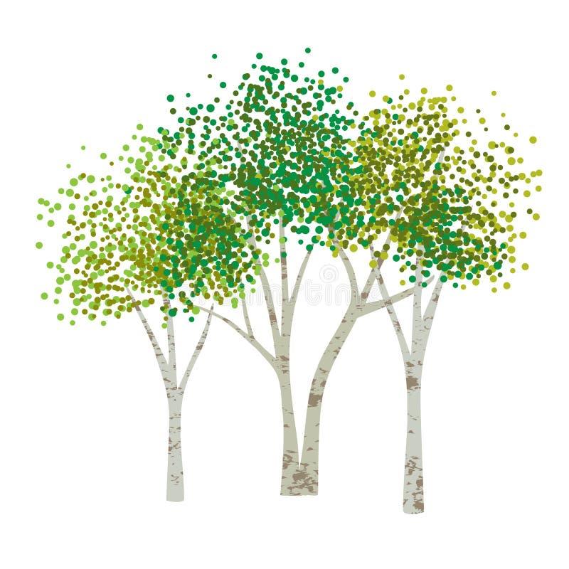 Hand drog asp- björkträd stock illustrationer