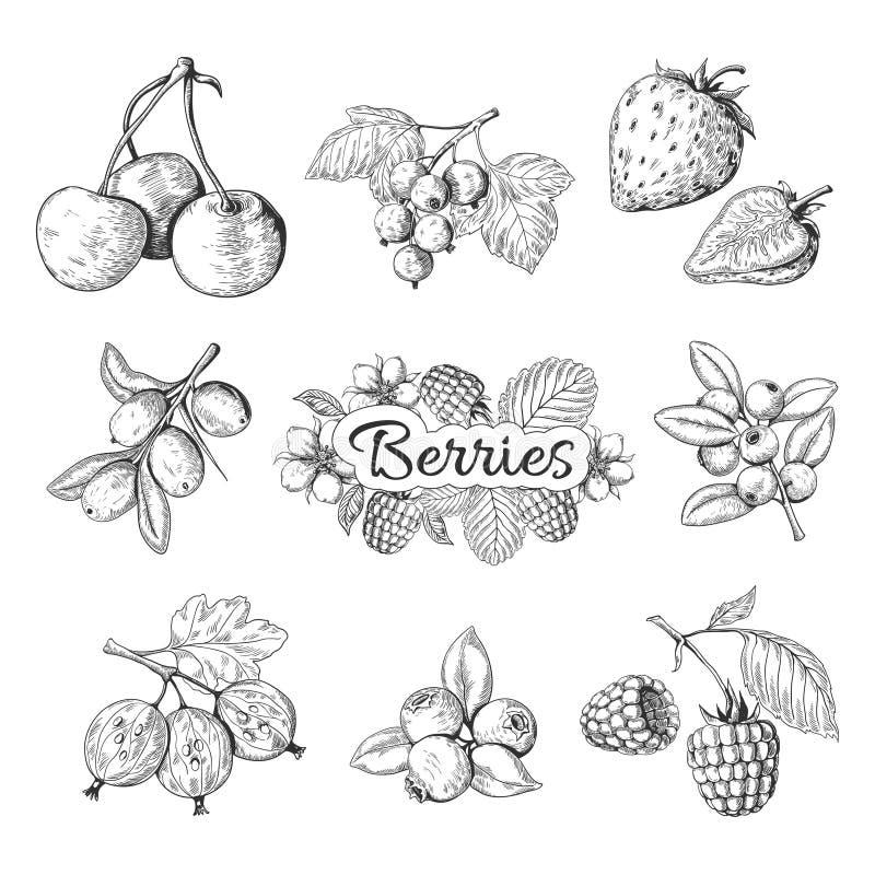 Hand drog bär Den körsbärsröda teckningen för tappning för blåbärjordgubbebjörnbäret, bär skissar teckningen som stylized swirlve royaltyfri illustrationer