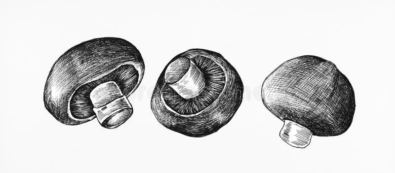 Hand drog champinjoner som isoleras på vit stock illustrationer