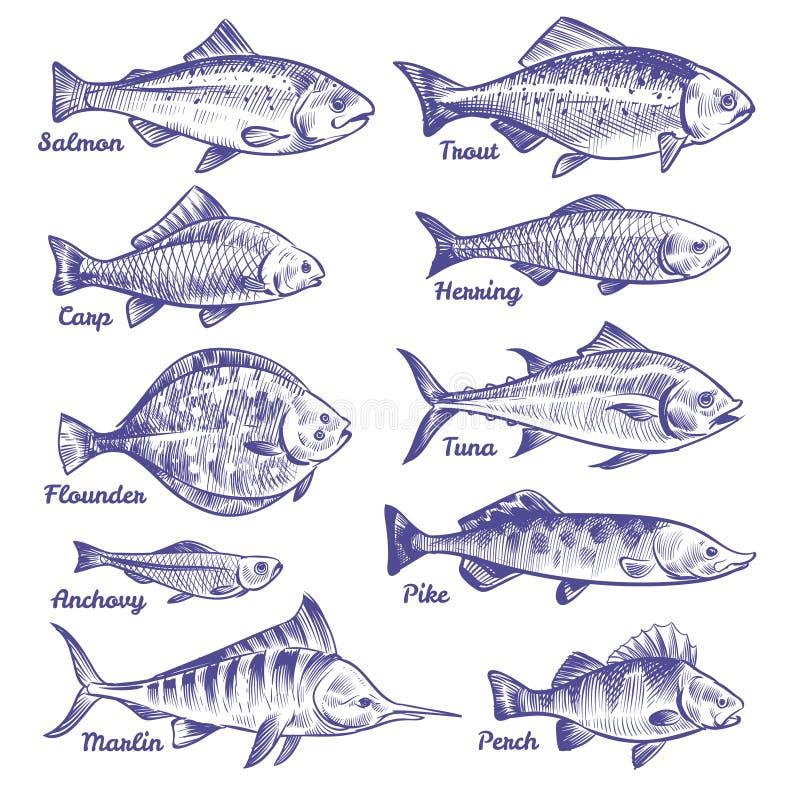 Hand drog fiskar Fiskar för havhavsfloden skissar att fiska den havs- piken för sittpinnen för forellen för ansjovisen för sillto royaltyfri illustrationer