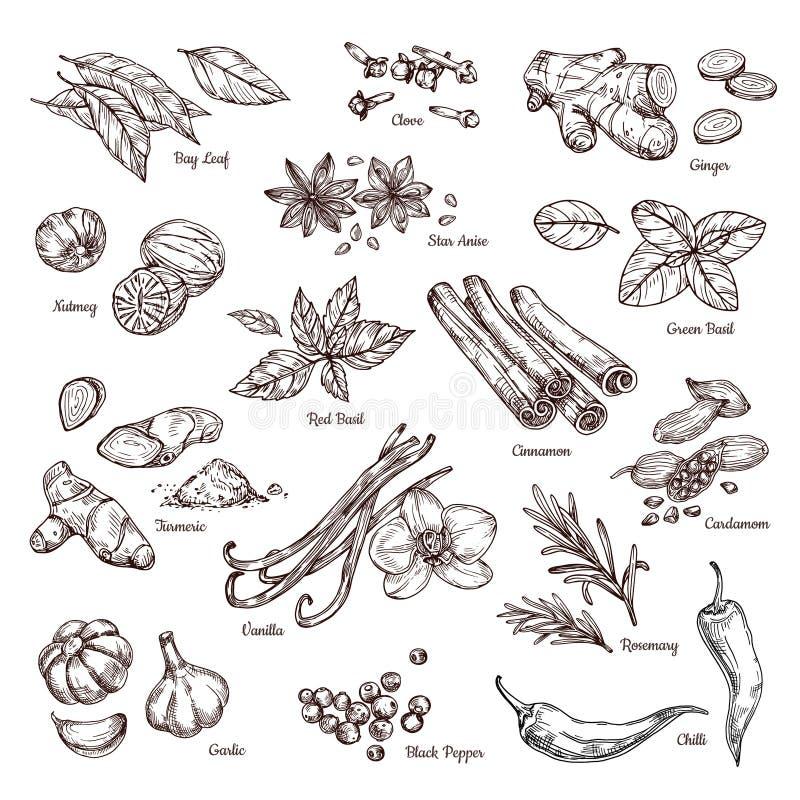 hand drog kryddor Vanilj och peppar, kanel och vitlök Skissa isolerade vektoruppsättningen för kök den örter stock illustrationer
