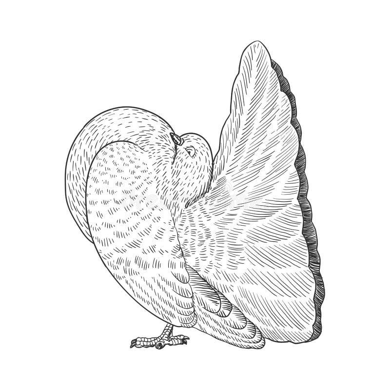 Hand drog par av vitduvaillustrationen royaltyfri illustrationer