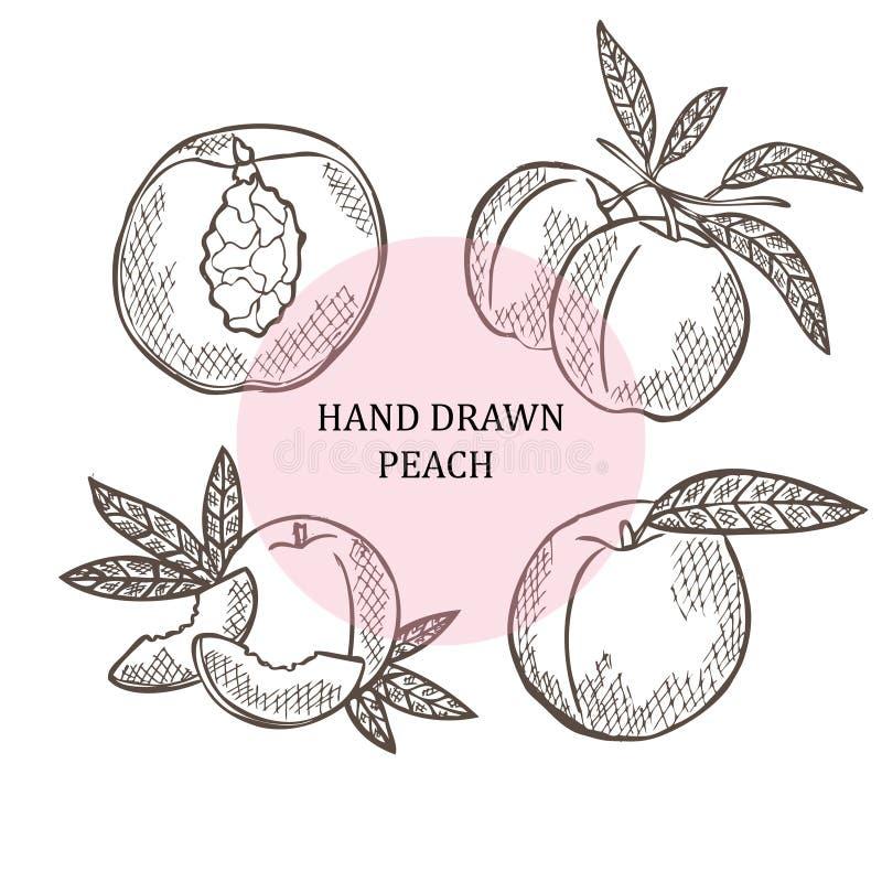 Hand drog persikafrukter royaltyfri illustrationer