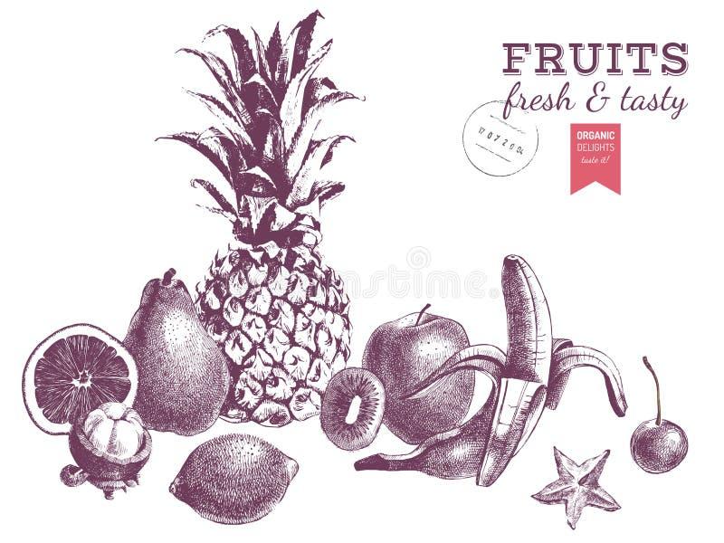 Hand drog saftiga frukter Monokrom vektorgräns vektor illustrationer