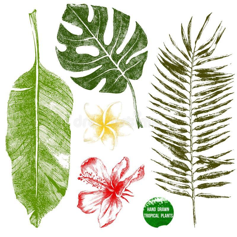 Hand drog tropiska sidor och blommor vektor illustrationer