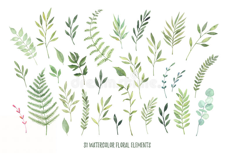 Hand drog vattenfärgillustrationer Botaniska clipartlager stock illustrationer