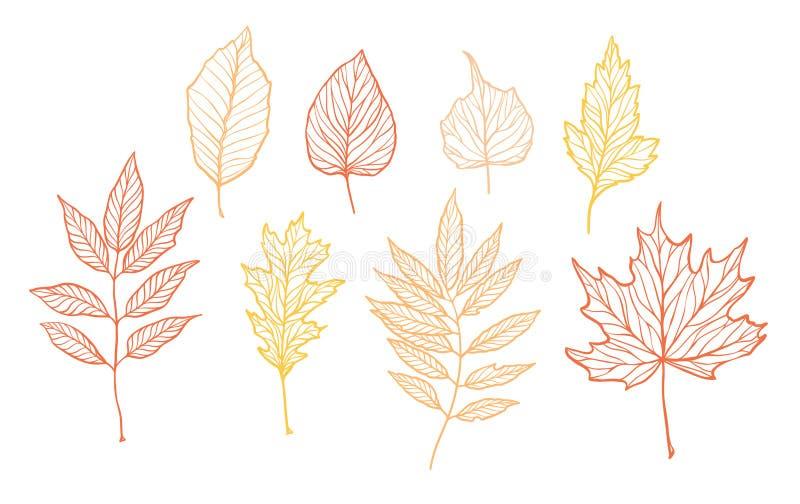 Hand drog vektorillustrationer Uppsättning av nedgångsidor Skogdesi vektor illustrationer