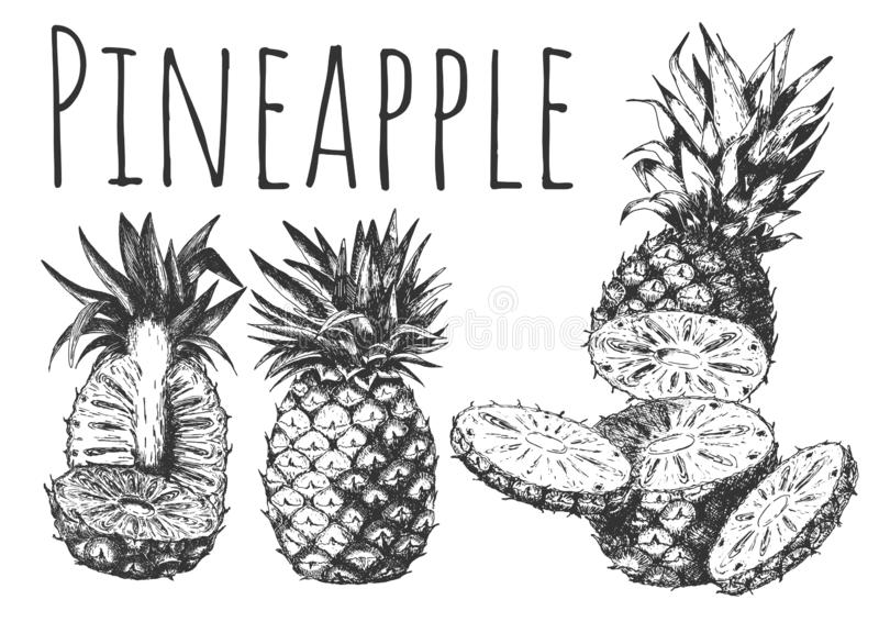 Hand drown tropical fruits set with pineapple cut royalty free illustration