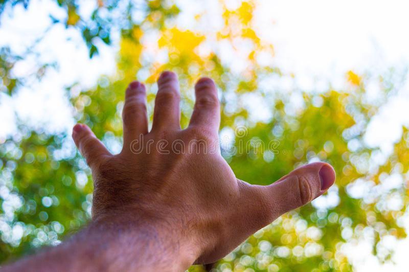 Hand eines Mannes und der Natur stockfoto
