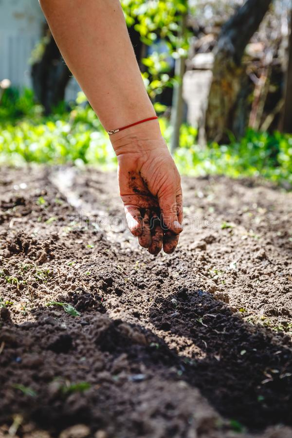 The hand of an elderly woman pours the earth on sowing. The concept of gardening, life on earth, style.  royalty free stock photography