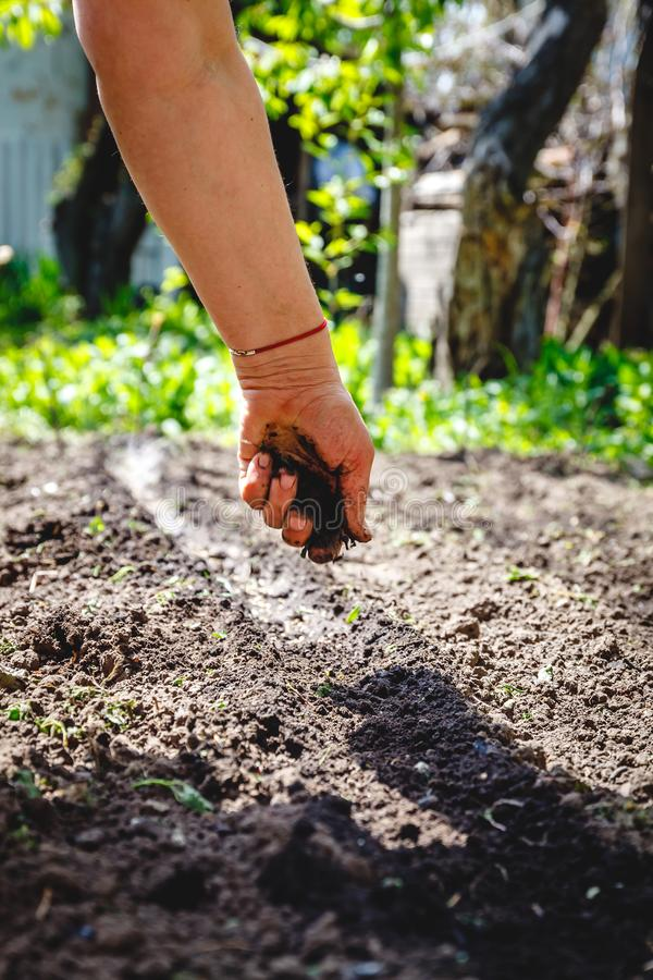 The hand of an elderly woman pours the earth on sowing. The concept of gardening, life on earth, style.  stock photography