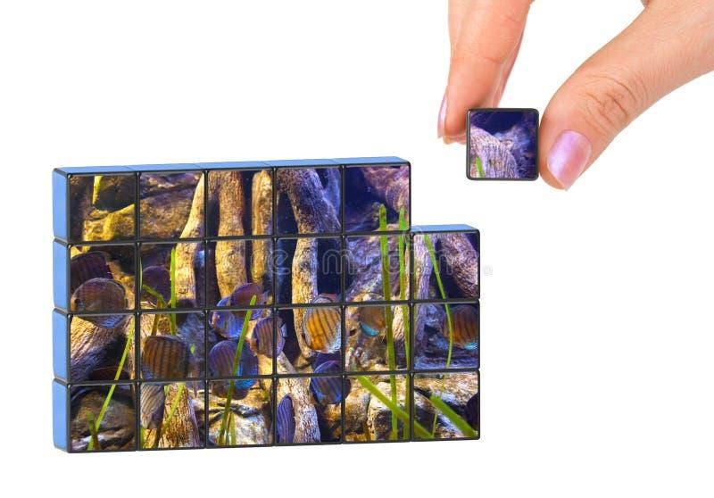 Hand en aquarium (mijn foto) raadsel royalty-vrije stock afbeeldingen