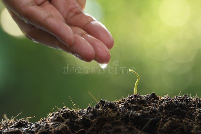 Hand för bonde` som s bevattnar en ung växt på naturbakgrund royaltyfri fotografi
