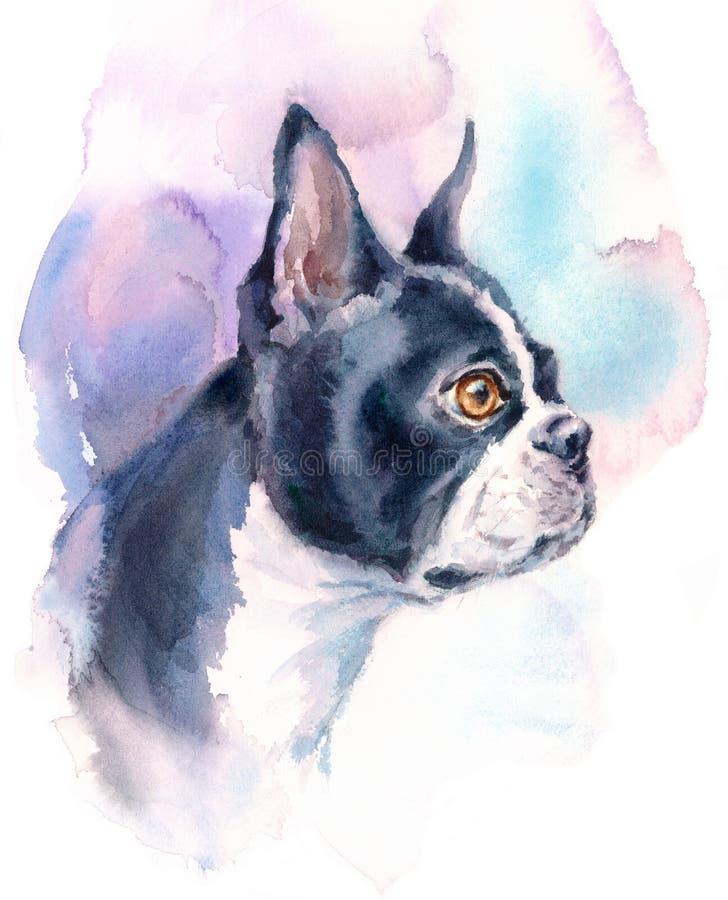 Hand för illustration för avel för Boston Terrier vattenfärghund målad djur vektor illustrationer