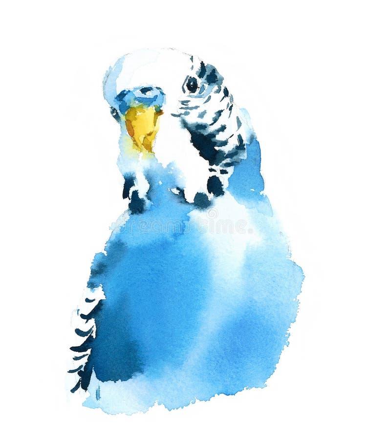 Hand för illustration för fågel för blå undulatparakitervattenfärg dragen exotisk vektor illustrationer