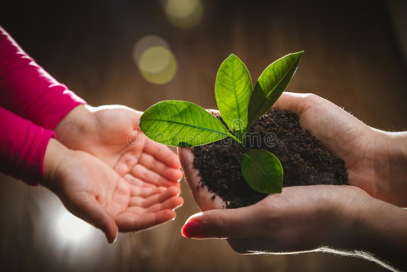 Hand för moder` som s ger det unga trädet till ett barn för att plantera tillsammans i grön naturbakgrund arkivbild
