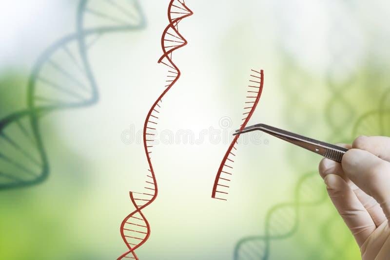 Hand fügt Reihenfolge von DNA ein Gentechnik, GMO und Genmanipulationskonzept stockfotos