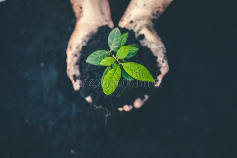 Hand f?r das Pflanzen von B?umen zur?ck zu dem Wald, Bewusstsein f?r die Liebe schaffend wild, Konzept der wild wachsenden Pflanz stockfoto