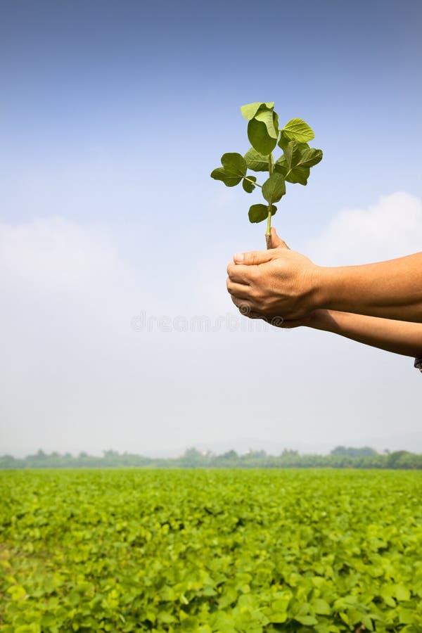 Hand of farmer holding sapling stock image