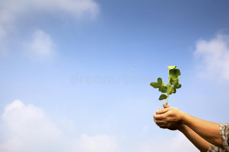 Hand of farmer holding young plant royalty free stock photos