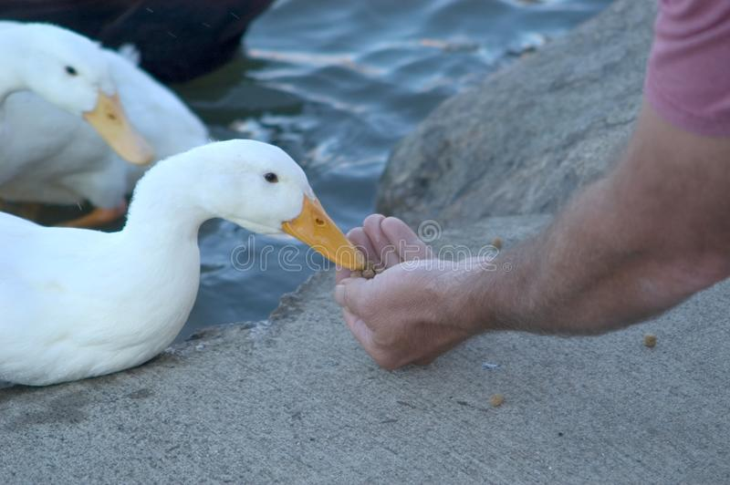 Hand Feeding
