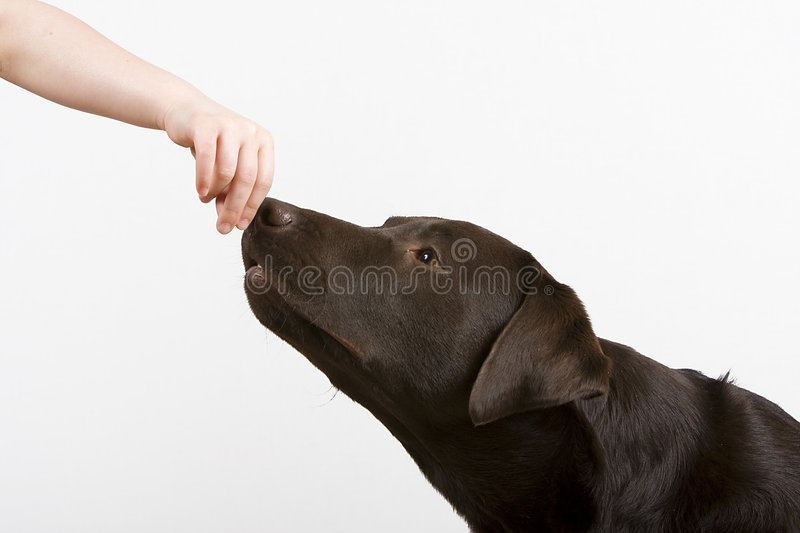 Hand that Feeds Him stock photos