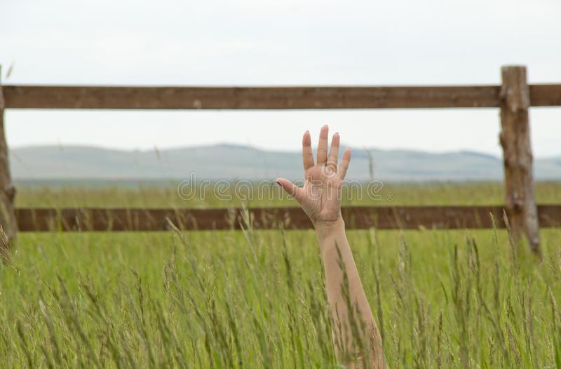 The hand in a field. Hand stretched from a green grass upwards royalty free stock photography