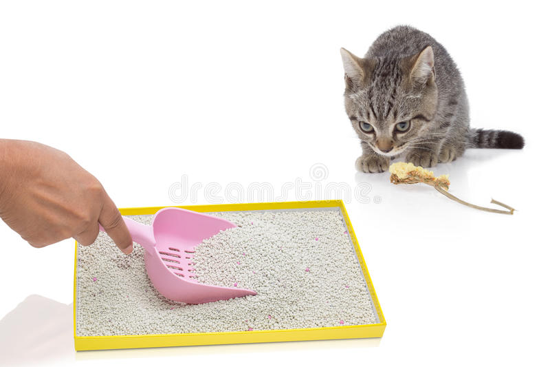 A hand filtering artificial sand in tray and cat gazing. A hand filtering artificial sand with pink plastic shovel in tray and cat gazing royalty free stock photo