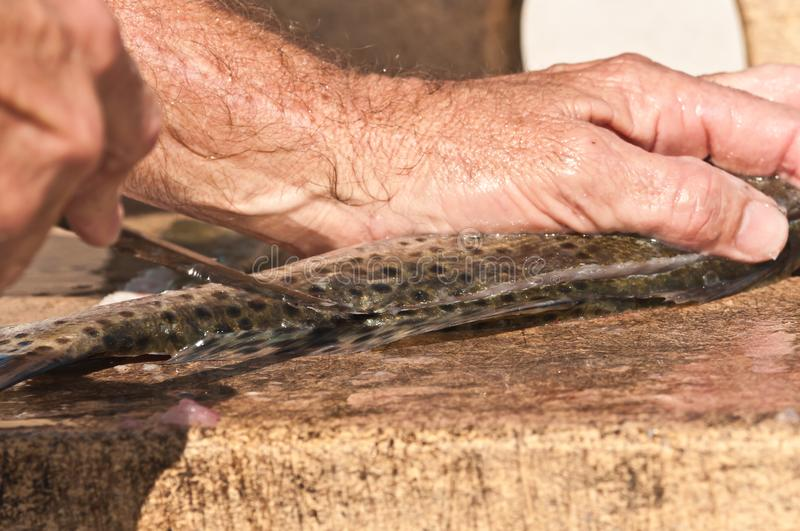 Fisherman filleting a sea trout. Hand of a fisherman filleting a sea trout at a cleaning station of a tropical marina on the Gulf of Mexico royalty free stock photo