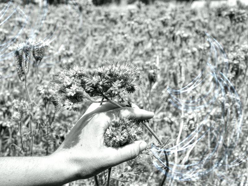 Hand flower beautiful touching woman nature landscape stock image