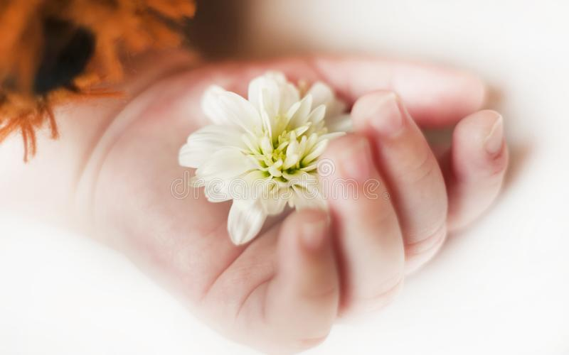 Hand with flower of a sleeping newborn baby close up isolated background royalty free stock image
