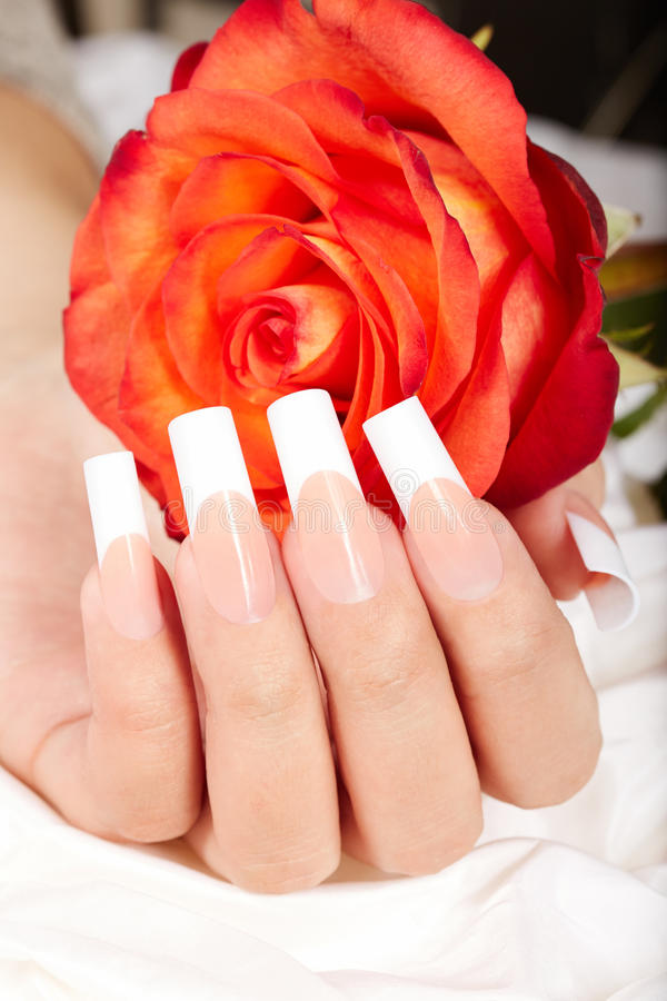 Hand with french manicured nails and red rose flower. Hand with long artificial french manicured nails and red rose flower stock image